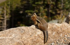 2010-08-08 Rocky Mountain National Park 02